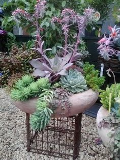 El Arte de combinar plantas Suculentas.
