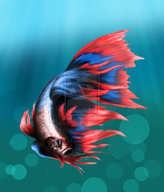 betta fish drawing - Google Search