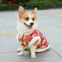 This dog coat is a typical tang suit with a strong Chinese style. Corgi Clothes, Small Dog Clothes, Dog Suit, Dog Winter Coat, Dog Pajamas, Medium Sized Dogs, Pet Fashion, Dog Hoodie, Warm Outfits