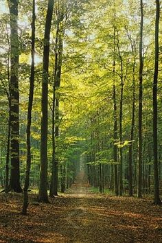 The Forest Path - Nature Poster, 24x36 - Off The Wall Toys and Gifts