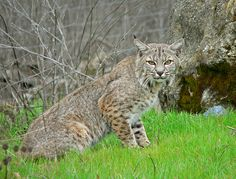 Expel Student Who Killed Bobcat to Show School Spirit - ForceChange               I DESPISE STUPIDITY AND IGNORANCE AND, ESPECIALLY, MURDER.  Sometimes, when  I read these petitions, I can't even believe it's true.  Unfortunately, it is true, and my heart breaks.