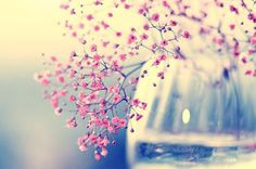 Wallpaper Sweet by Nichhi on DeviantArt Pretty Flowers, Pretty In Pink, Pink Flowers, Simple Flowers, Wallpaper Sweet, Bouquet Champetre, Gypsophila, Luz Natural, Pretty Pictures