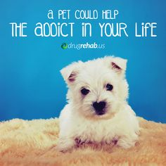 Discover how a pet could help the addict in your life experience responsibility, care and unconditional love.
