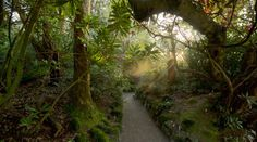 The Lost Gardens of Heligan (13)