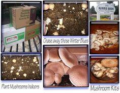 Growing Mushrooms Indoors  gardenwiseliving.com