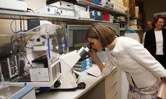 Doña Letizia observa a través de uno de los microscopios del los laboratorios de investigación de la unidad pediátrica de lucha contra el cáncer National Institutes of Health. Washington D.C., 16.09.2015