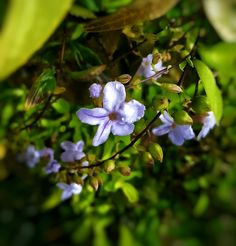Every flower must push through dirt, to bathe in sunlight🌸🌅
