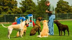Best pets training schools to learn the art of training pets