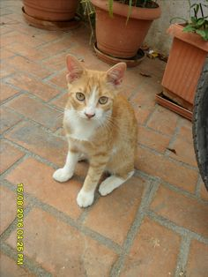 Cats in Crete, Greece Orange Cats, White Cats, Pretty Cats, Beautiful Cats, Catus, Crete Greece, Red Cat, Greek Islands, Tuxedo