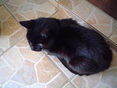 Meu véinho, meu primeiro gatinho, que Deus o tenha no céus nos animaizinhos do coração! Pelé!