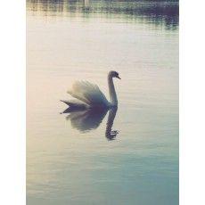 My Photos, Bird, Animals, Animales, Animaux, Birds, Animal Memes, Animal, Animais