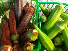 A Cure for All Disease Except Death: Making Okra Water for Diabetes