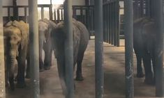 POLL: Should wild elephants be sold to Chinese zoos? by Supertrooper http://focusingonwildlife.com/news/poll-should-wild-elephants-be-sold-to-chinese-zoos/