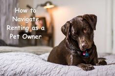 How to navigate renting as a pet owner #petcare #petowner #dog #cat #renting Funny Animal Memes, Dog Memes, Funny Animals, Dog Shop, Getting A Puppy, R Dogs, Puppy Care, Dog Carrier, Pet Gifts