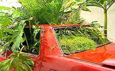 Carros abandonados e caçambas são usados para chamar a atenção do verde em São Paulo