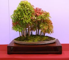 Bonsai tree forest
