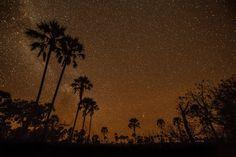 'No wilder place on Earth': explorers tackle the full Okavango Delta