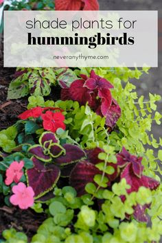 Shade loving plants for window boxes or containers that will attract hummingbirds to your home. Part Shade Plants, Part Shade Flowers, Best Plants For Shade, Types Of Flowers, Flowers That Like Shade, Window Box Plants, Window Box Flowers, Window Boxes, Flowers That Attract Butterflies