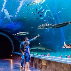 Loveland Living Planet Aquarium, Draper, UT