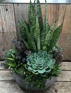 Succulent Landscaping, Succulent Gardening, Garden Landscaping, Organic Gardening, Vegetable Gardening, Landscaping Ideas, Gardening Tips, Flower Gardening, Gardening Gloves