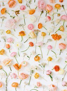 Cupcake Blog - | Cupcake - Women's Fashion Online