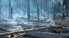 BBC News - Russian forest fires: Your pictures