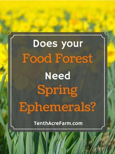 Spring ephemerals like daffodils dazzle springtime with colorful flowers, but their benefit extends beyond beauty in the permaculture garden.