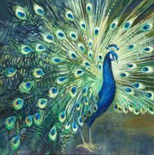 peacocks - Google Search