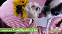 DIY Frozen Yogurt Pupsicles [Dog Cooking Video]