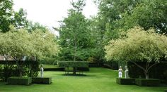 Salix 'Hakuro Nishiki' trees with a Ginkgo skirted by hedges ...