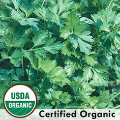 Herb, Parsley Giant from Italy Organic Catalog #0279A  (Petroselinum crispum) Sizeable bushy plants produce a continuous supply of large flat leaves with strong parsley flavor. Prized by Italian cooks. Biennial in zones 6-9, grown as an annual. 85-90 days.