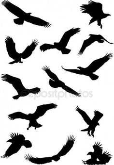 Eagle silhouette collection