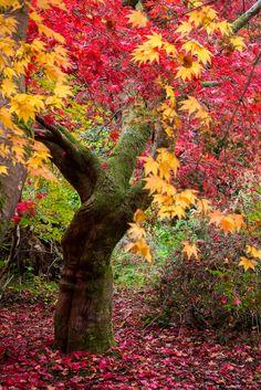 Winkworth Arboretum, Godalming, Surrey