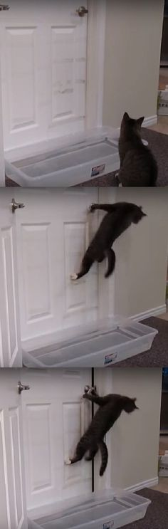 They Filled A Plastic Box With Water & Put It In Front Of This Door For A Hilarious Reason (VIDEO) #plastic #box #water #door #hilarious #cats #animals #pets #kitty