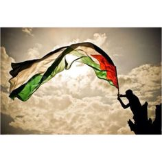 I'm so full of pride today. 138 in the U.N for Palestinian statehood, and we've finally earned observer status. I congratulate all of my people in the U.S and abroad.