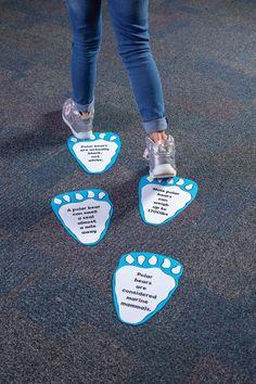 School volunteer Plus Size h&m plus size swimwear Polar Bear Facts, Bear Footprint, Enchanted Forest Book, Fair Theme, Fallen Book, Fair Games, Elementary Library, Story Time, Book Displays