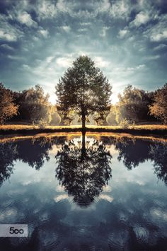 Broceliande sacred tree by thomas sifferlé on Symmetry Photography, Nature Photography, Cool Photoshop, Photoshop Effects, Beautiful Sky, Beautiful Places, Sky Watch, French Countryside, Beautiful Waterfalls