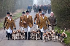 """Highly Commended in """"Hunting Under the Act"""" photo competition - Countryside Alliance - Westerby Bassets by Bob Spree Equestrian Style, Equestrian Fashion, Country Life, Country Style, British Countryside, Fox Hunting, The Fox And The Hound, Photo Competition, Horse Farms"""