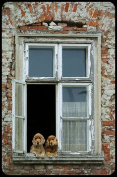 dogs enjoying the view ~ french cottage window