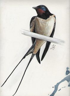 Swallow by Esiuol-Saxdelinquant on DeviantArt - Swallow by Esiuol-Saxdelinquant - Bird Drawings, Animal Drawings, Vintage Bird Illustration, Giant Animals, Barn Swallow, Colored Pencil Techniques, Bird Crafts, Bird Pictures, Vintage Birds