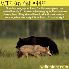 10 Crazy WTF Facts About Bears - World's largest collection of cat memes and other animals Animals And Pets, Baby Animals, Funny Animals, Cute Animals, Baby Pandas, Wild Animals, Funny Facts, Weird Facts, Crazy Facts