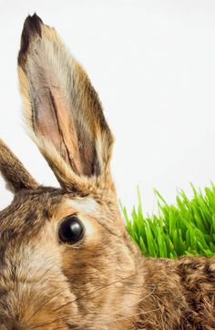 37 Rabbit Facts for Kids: Types of Rabbit Breeds and how to care for your Pet… House Rabbit, Pet Rabbit, Rabbit Deterrent, Rabbit Facts, Rabbit Resistant Plants, Classroom Pets, Rabbit Breeds, Raising Rabbits, Bunny Care