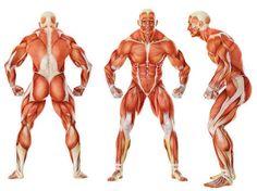 「muscle leg」の画像検索結果