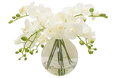 White Phalaenopsis in Large Bubble Bowl on OneKingsLane.com - Headed by designer Michael Hansen, The French Bee creates handmade faux-floral arrangements with impeccably realistic detail. Each unique bouquet is thoughtfully and artfully assembled to ensure a breathtaking, beautiful result that will last for years.