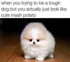 Poor grammar, but super cute pup.