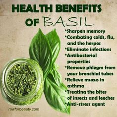 Foods Health benefits of Basil. I had no idea. I plan to eat more, I could use some extra boost.Health benefits of Basil. I had no idea. I plan to eat more, I could use some extra boost. Natural Health Remedies, Natural Cures, Herbal Remedies, Natural Healing, Holistic Remedies, Health And Nutrition, Health And Wellness, Health Fitness, Health Zone