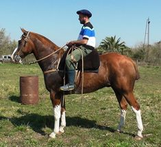 VENDIDO A TUCUMAN -ALAZAN TOSTADO OVERO EXCELENTE Rodeo, Riding Helmets, Passion, Hats, Animals, Horses, Country Man, Horses For Sale, Mongrel