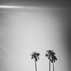 Palm trees and sunlight
