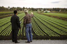 nice Бизнес-идеи для начинающих: планирование фермерского хозяйства Читай больше http://yurface.ru/biznesa-s-nulya/idei-dly-nachinaushih-fermerstvo/