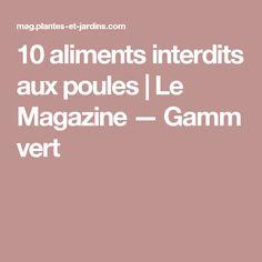 10 aliments interdits aux poules | Le Magazine — Gamm vert